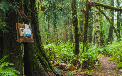 A Phone in the Forest Helps Grieving Talk with Loved Ones